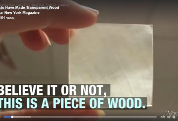 Wood but transparent, who's interesting for?!
