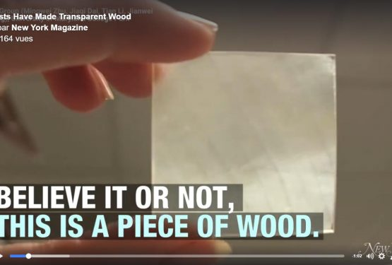 Du bois translucide, ça intéresse qui ?!