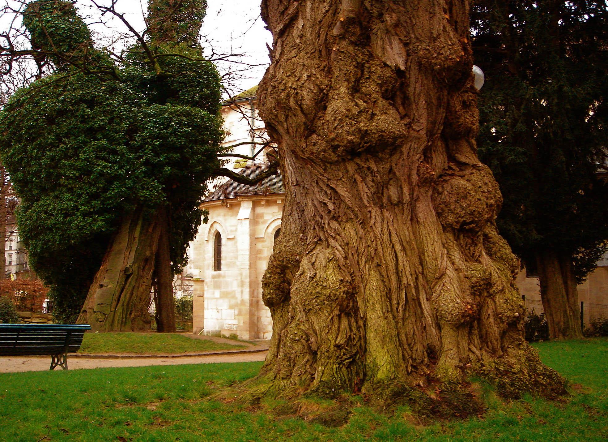 robinier faux acacia_by G@ttoGiallo (https://www.flickr.com/photos/gattogiallo/)